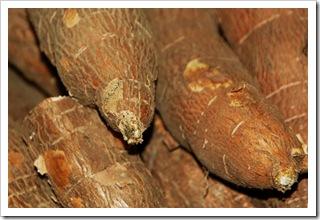Korzenie manioku