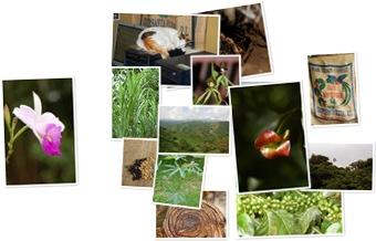Wyświetl galerię Monteverde