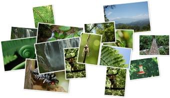 Wyświetl galerię Wodospad Pulhapanzak i Park Narodowy Cerro Azul Meambar