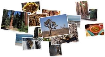 Wyświetl galerię Kalifornia - Sequoia, Kings Canyon i okolice