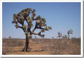 Ta pustynia ma jeszcze drzewka ale nic poza nimi