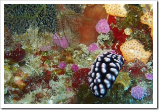 Podwodne ogrody i ich mieszkańcy