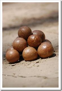 Wspaniałe orzeszki macadamia