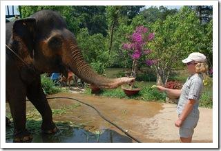 Słoniu masz swój żółty przysmak