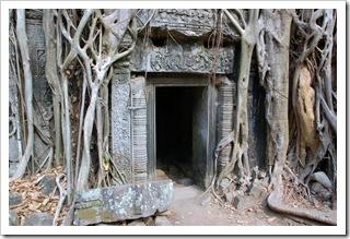 Słynne drzewo Tomb Raider
